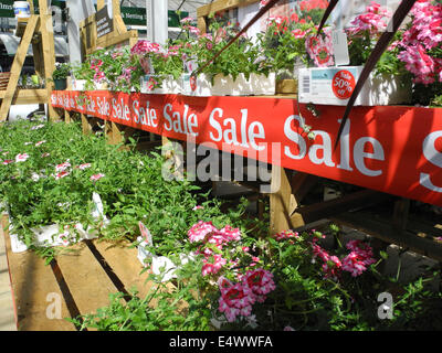 garden centre sale half price surplus overstock plants EDITORIAL USE ONLY