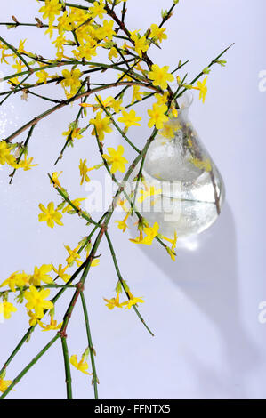 aroma, asia, botanical, bush, bushes, china, flora, florapix, flower, flowers, green, humile, inflorescence, glass, vase, jasmin