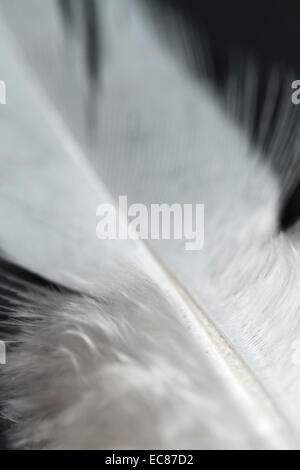 white feather close-up.