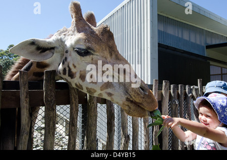 Little girl feeds a Giraffe in the zoo.