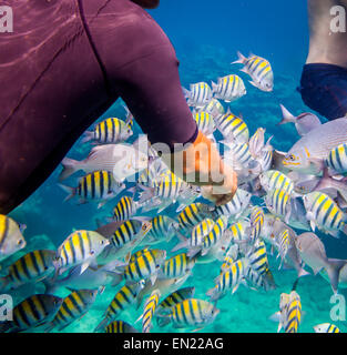 Man feeds the tropical fish under water.Ocean coral reef. Warning - authentic shooting underwater in challenging conditions. A l