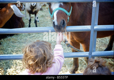 Child Feeds Horse at Petting Zoo at Farm