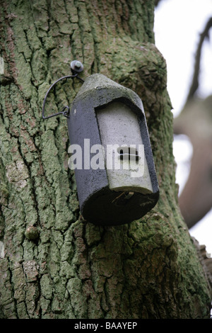 Batbox Attached to a Tree to Attract Bats to Roost