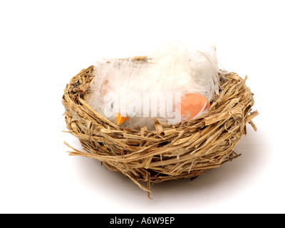 Chick in an Nest