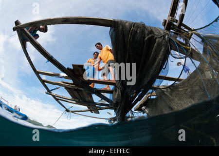 Fisherman feeds Whale Shark, Rhincodon typus, Triton Bay, West Papua, Indonesia