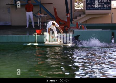 A Miami Seaquarium trainer bends over to feed a fish to a performing porpoise, the Florida Pavilion, 1964 New York World's Fair, Flushing Meadows Park, Queens, New York, 1964. ()