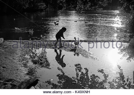Child feeds a duck in a pond