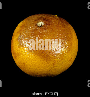 Stem end rot (Diplodia natalensis) on stored orange fruit