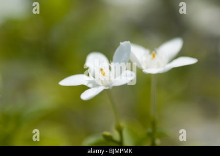 Pure white flowers on blurred background Copy space