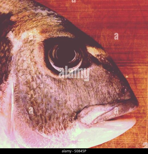 head-of-gilthead-fish-on-wooden-board-cl