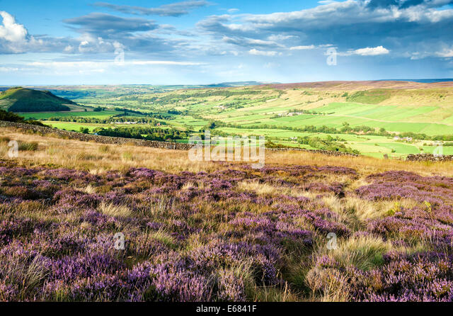 heather-on-danby-rigg-with-little-fryup-