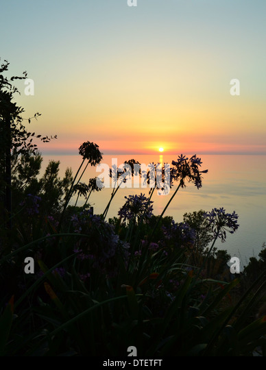 sunset-with-plants-in-the-foreground-tak