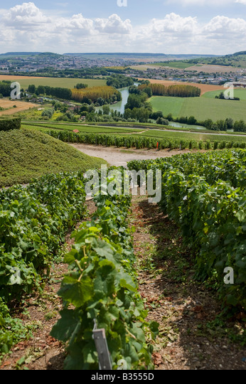 vineyards-leading-down-to-the-river-marn
