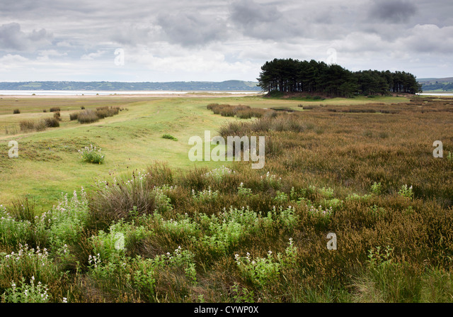 whiteford-national-nature-reserve-gower-