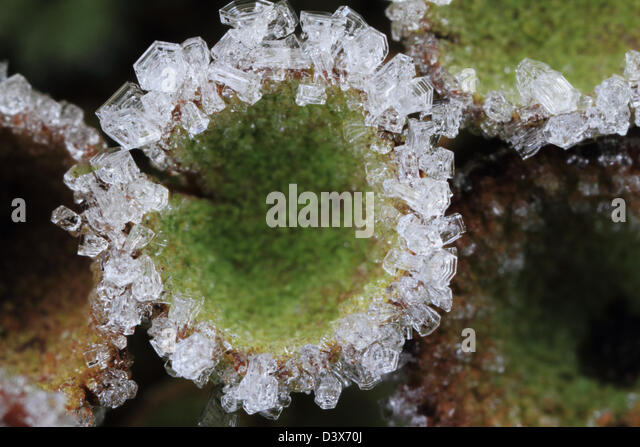 hoar-frost-crystals-on-the-rim-of-a-cup-