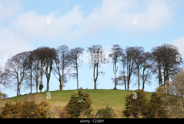 trees-on-top-of-hill-cricket-st-thomas-s