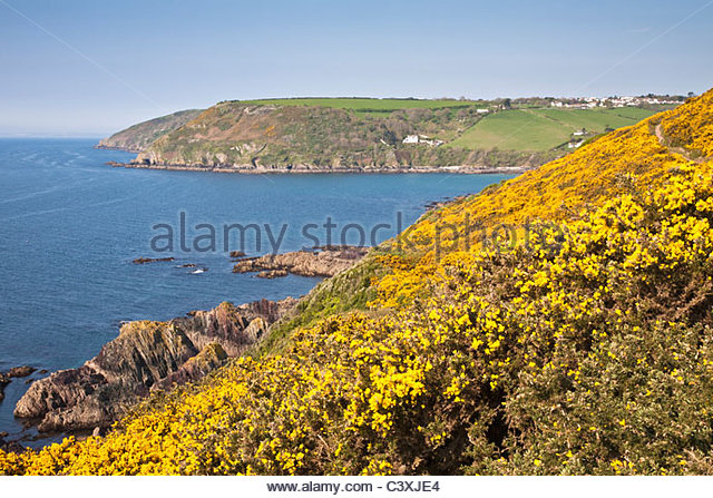 landscape-view-of-bright-yellow-gorse-on