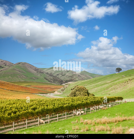 sweeping-view-of-autumn-vineyard-in-the-