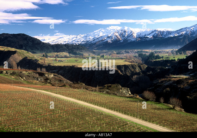 chard-farm-vineyard-wakatipu-basin-near-