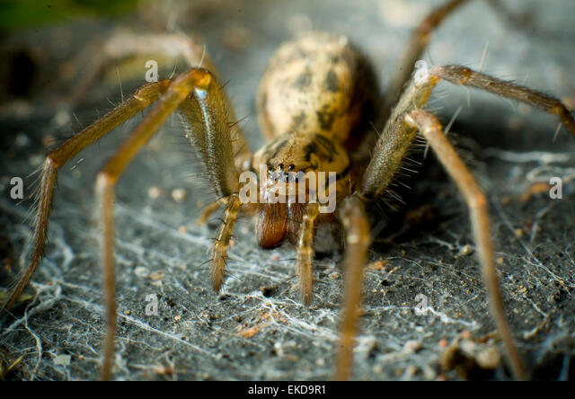 extreme-close-up-of-a-house-spider-tegen