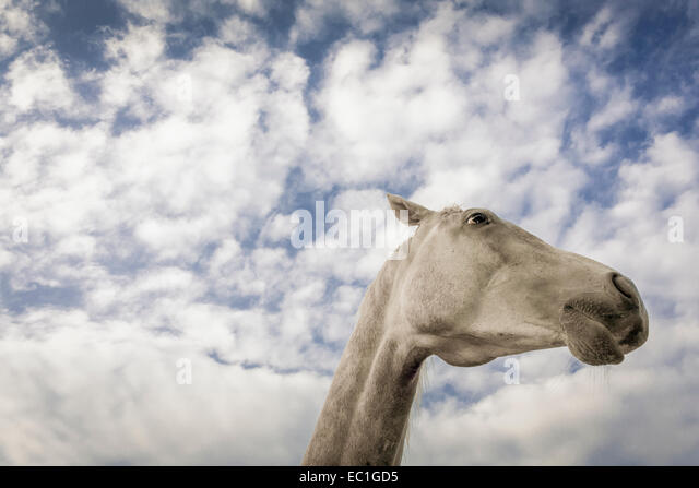 extreme-low-angle-view-of-horses-head-ag