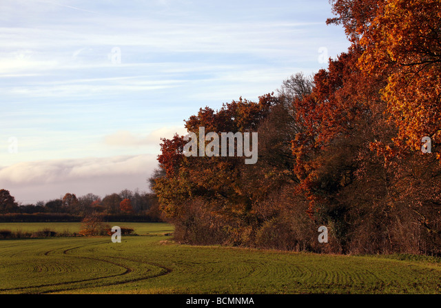 general-view-of-of-autumn-colours-on-agr