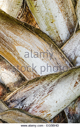 close-up-of-palm-tree-trunk-in-nehru-par