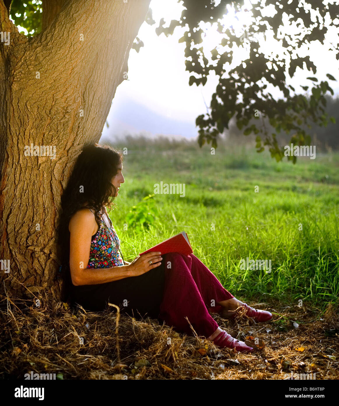 Sitting Under A Tree Pictures, Images and Stock Photos