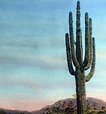 Ein Riesenkaktus in der Wüste es US-Bundesstaats Arizona. Amerika, América del Norte, América del Norte, Estados Foto de stock