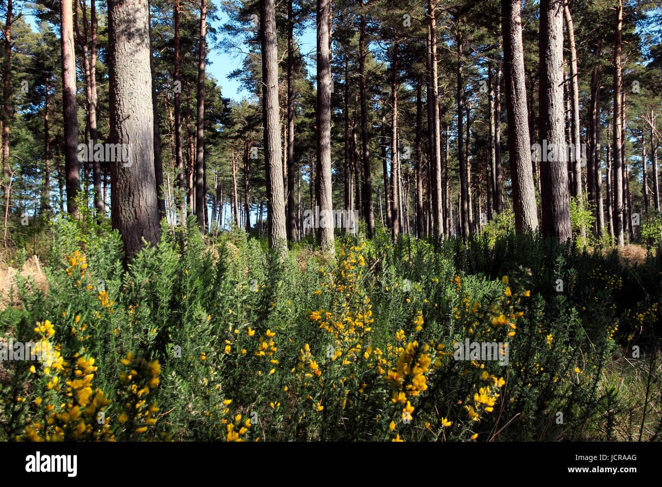 tentsmuir-forest-tentsmuir-point-scotlan